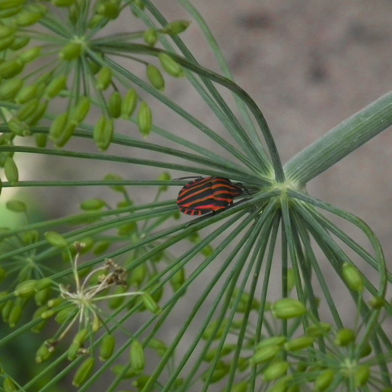 05_Insekten_04