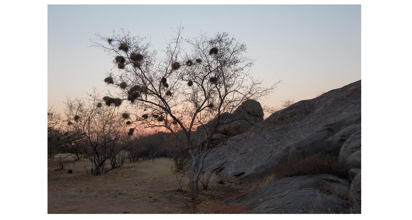 ©lupobn_Namibia2014_03