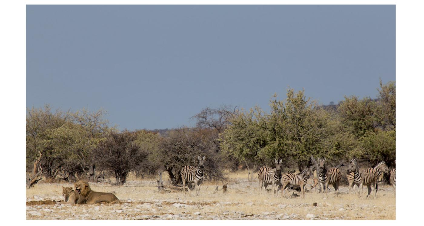 ©lupobn_Namibia2014_35
